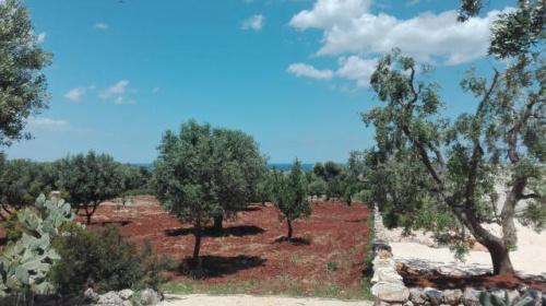 Terreno para construção em Carovigno