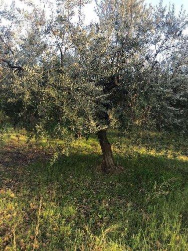 Terreno edificable en Torino di Sangro