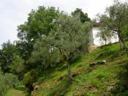 菲维扎诺房屋