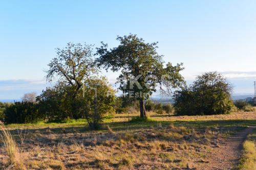 Terreno agricolo a Avola