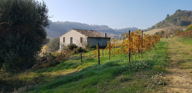 Bauernhaus in Montefiore dell'Aso