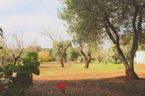 Terrain à Carovigno