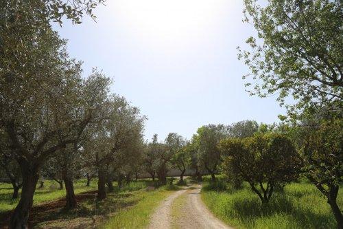 Hus på landet i Carmiano