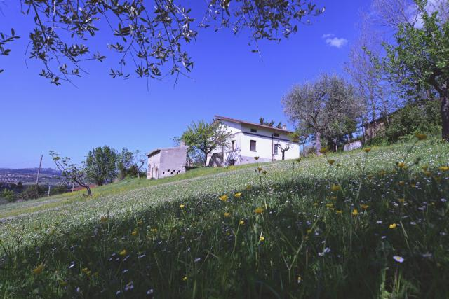 Haus in Ancarano