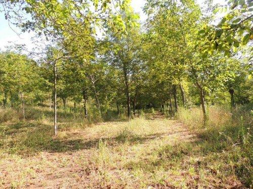 Terreno agrícola en Tocco da Casauria