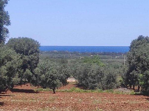 Terreno agrícola en Carovigno