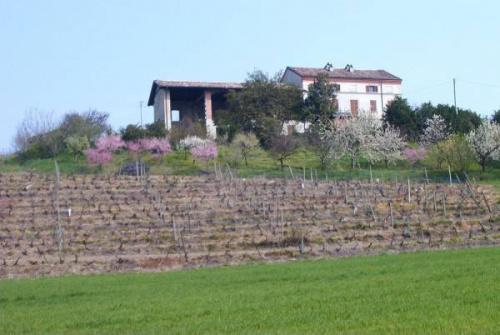 Lantställe i Ozzano Monferrato