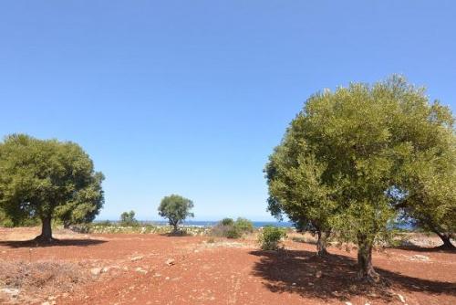 Land in Carovigno