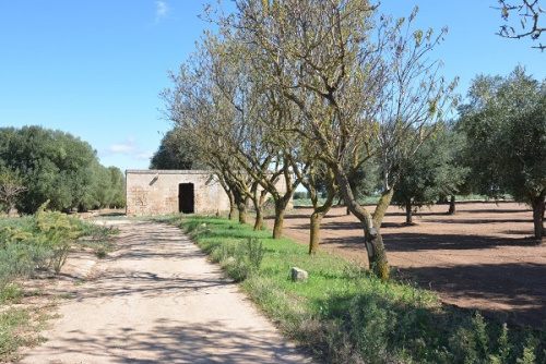 Farmhouse in Carovigno