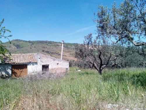 Farmhouse in Cupello