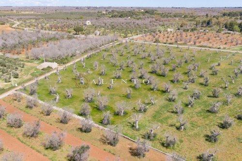 Terreno agrícola en Salve