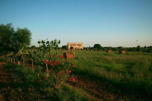 Farm in Mesagne