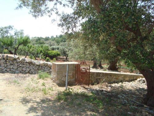 Lamia in Cisternino