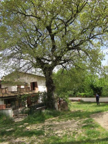 Hus på landet i Civitella Casanova
