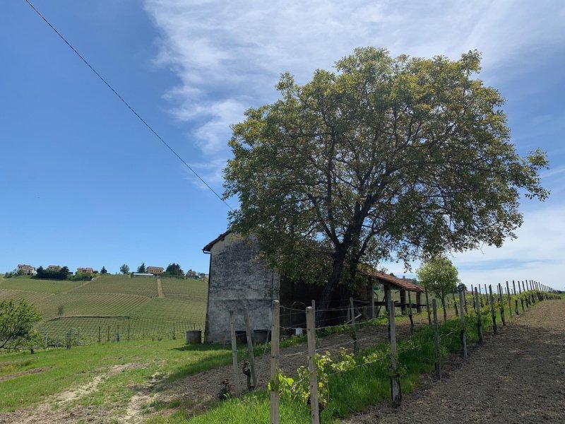 Casa en Ricaldone