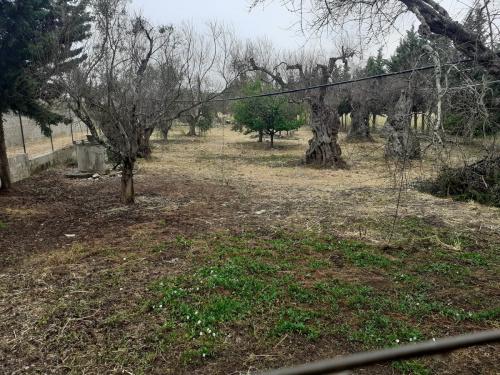 Building plot in Gallipoli
