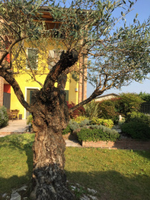 Semi-detached house in Buttapietra