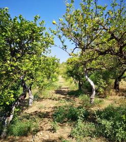 Farm in Noto