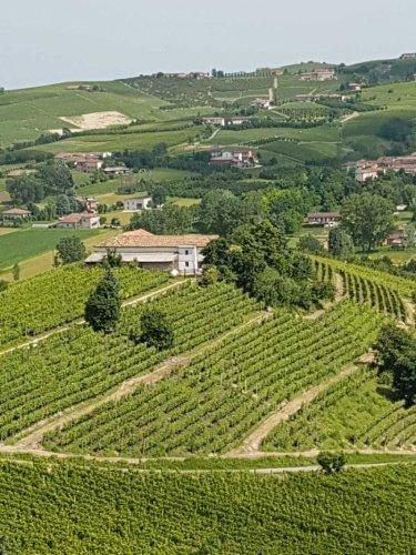 Landwirtschaftlicher Betrieb in Castagnole delle Lanze