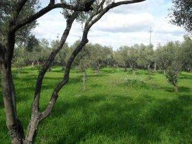 Landwirtschaftliche Fläche in Carlentini
