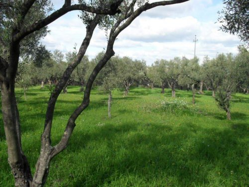 Terreno agrícola em Carlentini